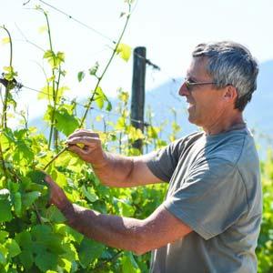 Vin Bio Alsace